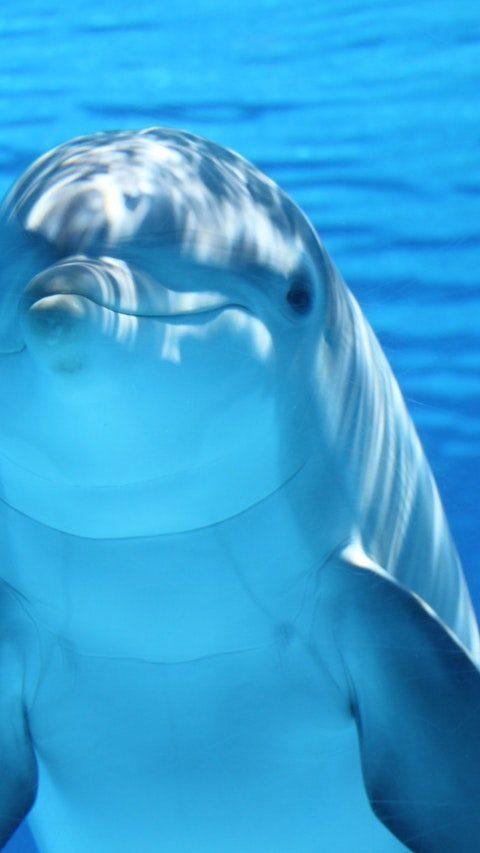 A delfinek közelebb állnak az emberekhez, mint hitted volna!
