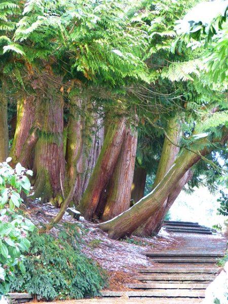 Az életfa