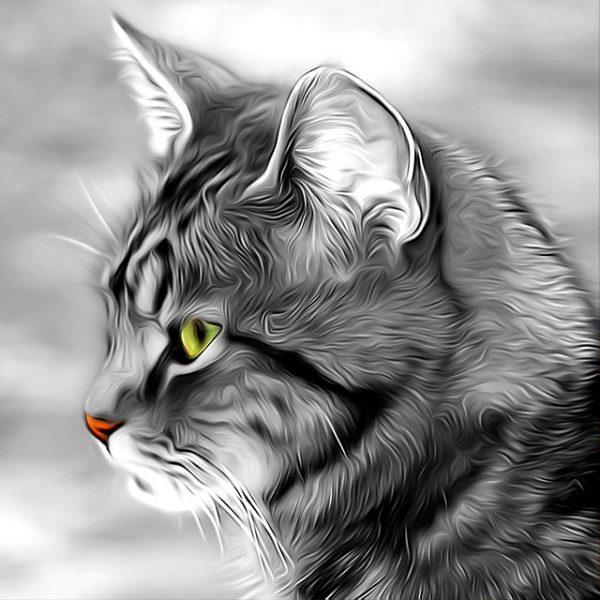 A Mágikus Macska