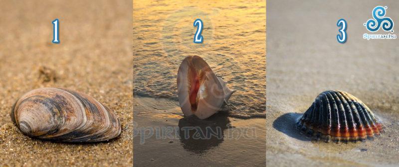 Válassz egy kagylót, hogy megtudd, mi vár rád a közeljövőben!