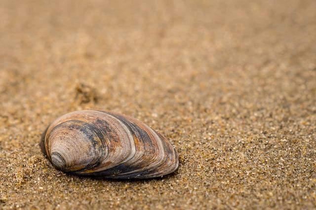 Ha az első kagylót választottad: ragaszkodj a tényekhez