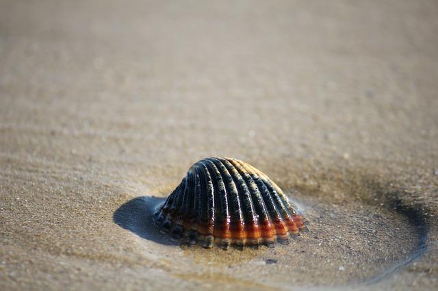 Ha a harmadik kagylót választottad: meditálj!