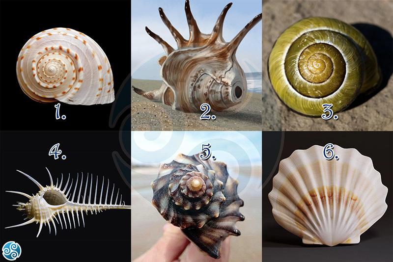 Válassz egy kagylót és tudd meg, mit üzen a tudatalattid!