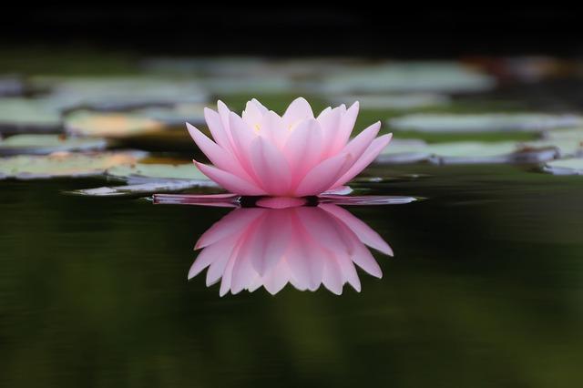 Zen buddhizmus és nyugati gondolkodás