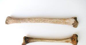 """A római kori óriás: egy """"különleges"""" csontváz Róma közelében."""