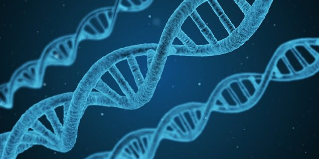 Először bizonyították ténylegesen, hogy az evolúció valóságos. Rossz hír a vegánoknak: a ragadozóknak köszönhető!