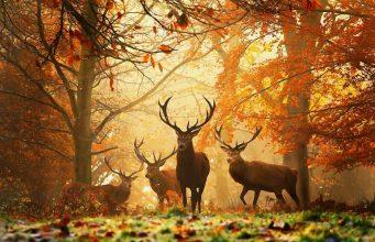 Az őszi napéjegyenlőség pontos ideje 2019-ben és Mabon ősi ünnepének titkai